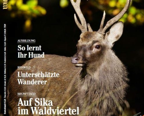 Wild_und_Hund